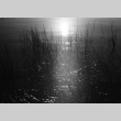 View of grasses in the lake (ddr-densho-336-436)