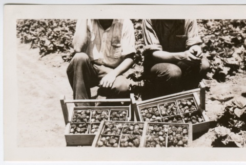 Two workers with strawberries (ddr-densho-313-16)