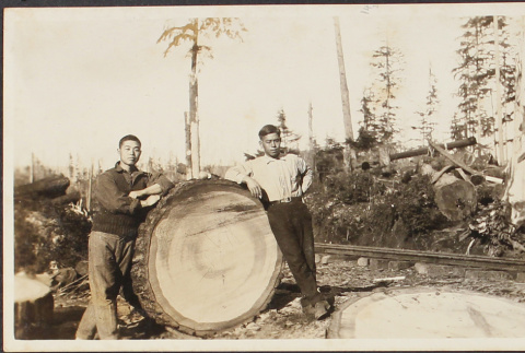 Two men with felled tree (ddr-densho-278-175)