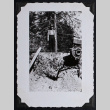 Man in front of tree (ddr-densho-359-1433)