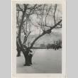 Tree covered with snow (ddr-manz-7-16)