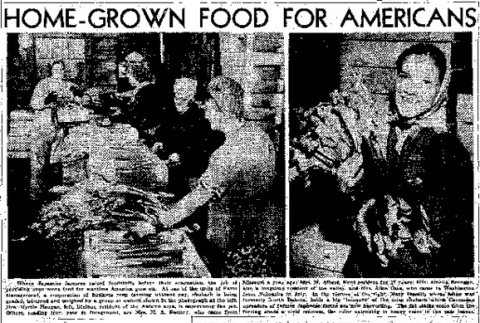 Home-Grown Food For Americans. Vegetable Shortage? Jap Evacuees' Farms Are Producing Plenty. Local Farm Management Group is Formed; Forgets Profits; 'Society Women,' Children Assist in Production Program (April 4, 1943) (ddr-densho-56-890)