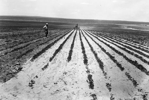 Man working a tractor in a field (ddr-fom-1-26)