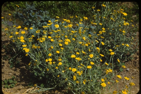 Flowers (ddr-one-1-440)