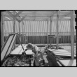 Japanese American working in lath house (ddr-densho-151-379)