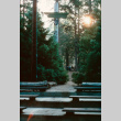 View from behind a totem pole towards the lake (ddr-densho-336-1089)