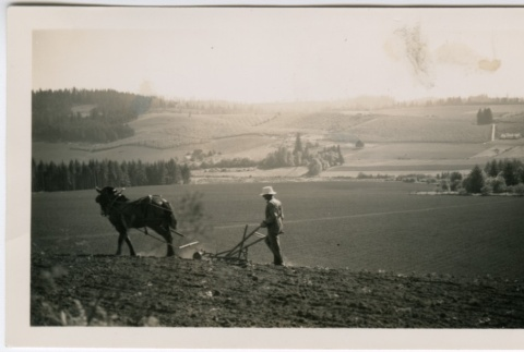 Horse and berry field worker (ddr-densho-313-9)
