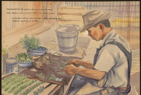 Painting of a man working with guayule cuttings (ddr-manz-2-17)
