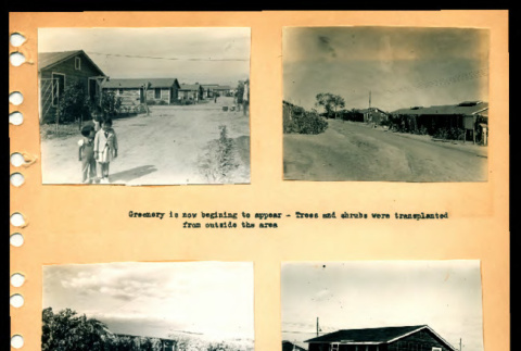 Greenery, roads, and walks being built by housing at Crystal City Department of Justice Internment Camp (ddr-csujad-55-1367)