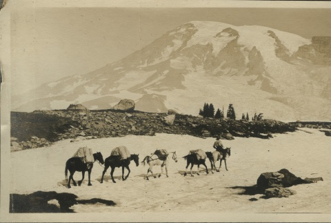 View of Mt. Rainier from Paradise Valley (ddr-densho-124-8)