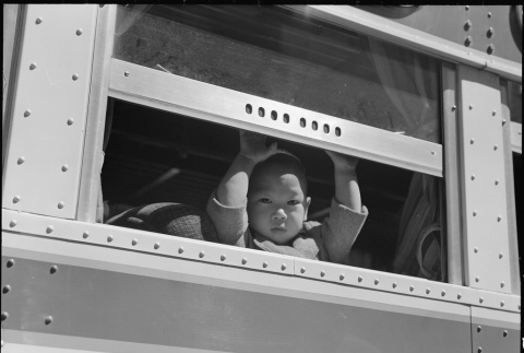 Child looking out of bus window (ddr-densho-151-174)