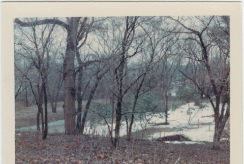 Area to be redesigned at the Brooklyn Botanic Garden (ddr-densho-377-24)