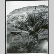 Photograph of a desert plant in front of a swimming pool in Death Valley (ddr-csujad-47-120)