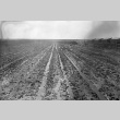 View of muddy agricultural fields (ddr-fom-1-10)