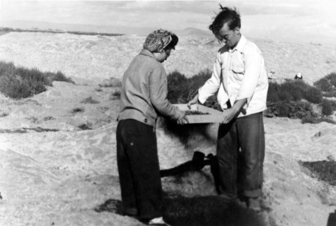 Japanese American and friend sifting for shells (ddr-densho-2-59)