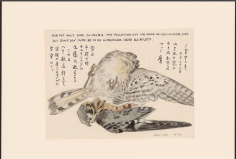 Painting of the Takamura Family's pet hawk (ddr-manz-2-1)