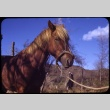 Horse outside (ddr-one-1-446)
