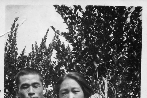 [Couple in apple orchard] (ddr-csujad-56-282)