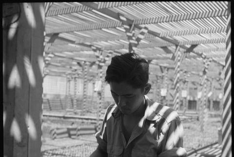 Japanese American working in lath house (ddr-densho-151-470)