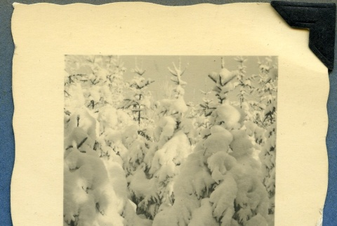 Trees covered in snow (ddr-densho-22-42)