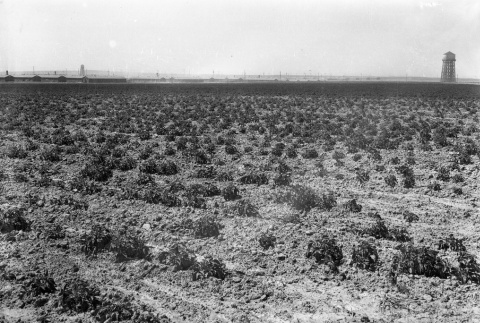 Agriculture fields (ddr-fom-1-812)